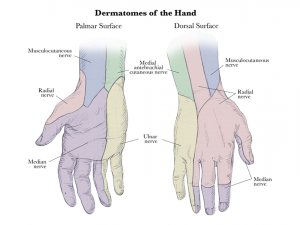 Handdermatome